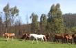 horse-slide-horses
